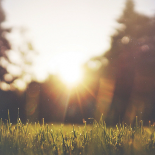 5 Unexpected Health Benefits of Sunshine